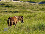 Wild Horses II print