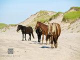 Wild Horses III print