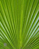 Palm Leaf print