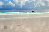 Beach Sandpiper II print