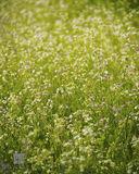 Flower Field print