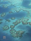 Bermuda Reefs print