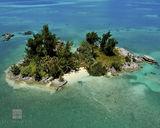 Palm Island print