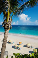 Beach Palm Trees II