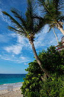Beach Palm Trees I