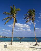 two, palms, cross, bay, southampton, blue, trees