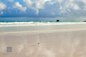 Beach Sandpiper II