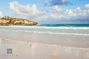 Beach Sandpiper I
