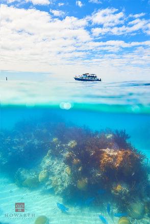 Reef Exploration