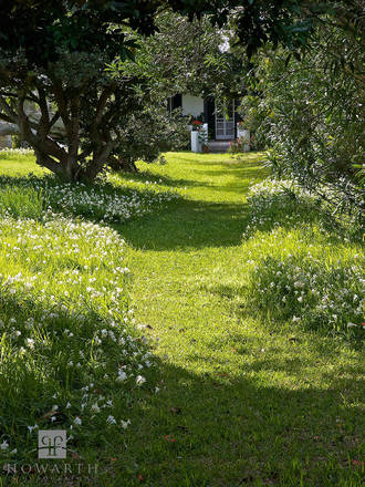 freesia, walk, garden, path, spring, flower, somerset,
