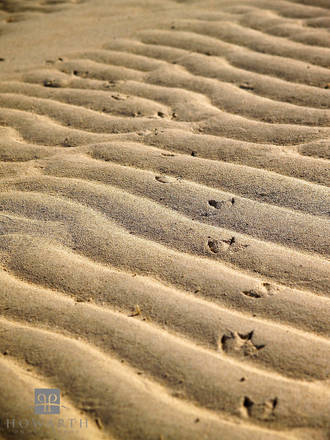 ripples, sand, beach, shallow