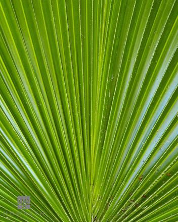 palm, leaf, closeup