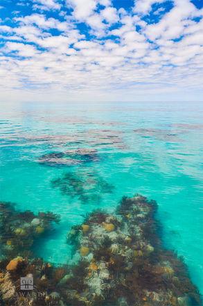 Reef Transition