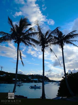 three, palms, trees, jews, bay, silhouette, evening, sky