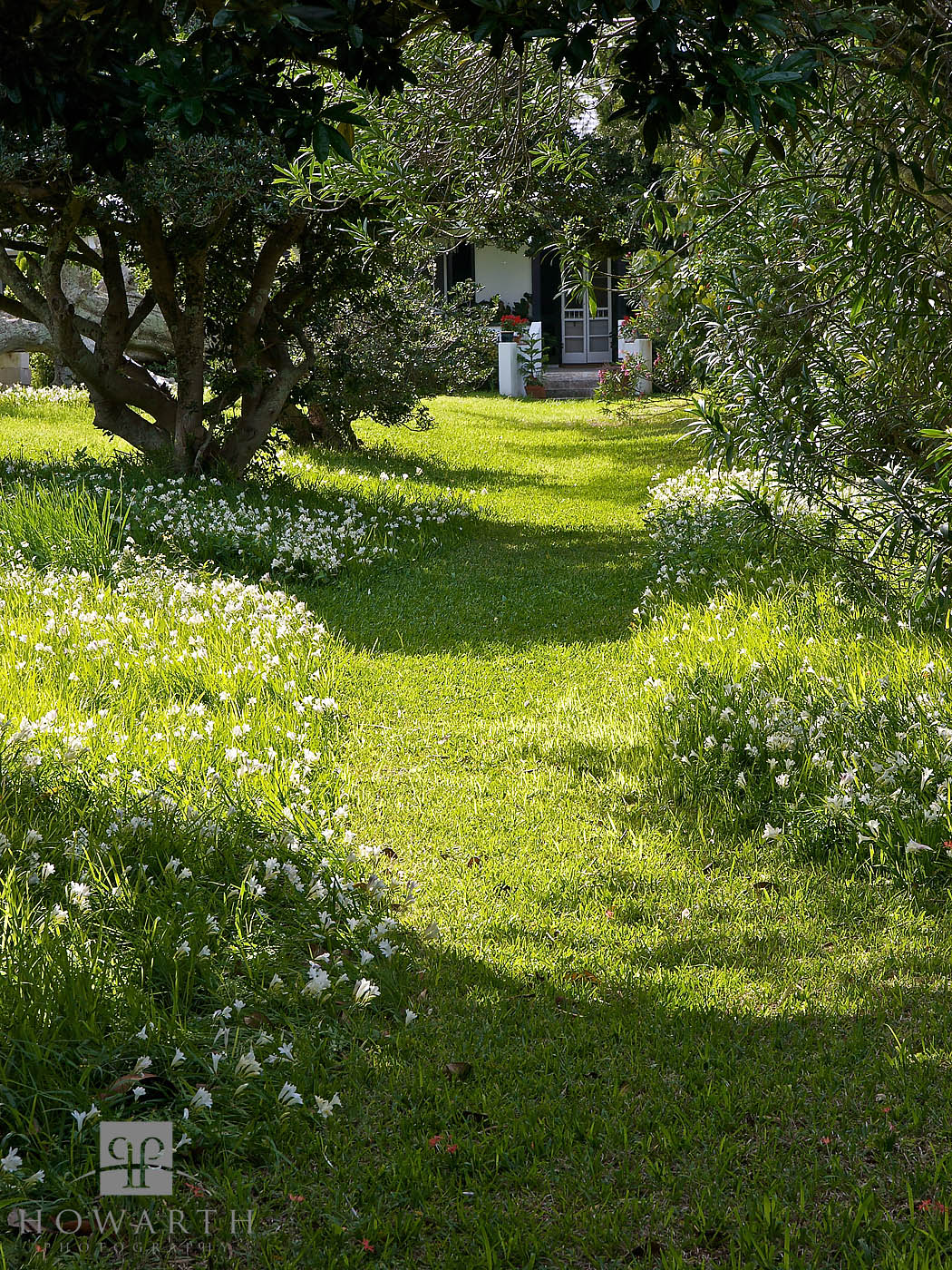 freesia, walk, garden, path, spring, flower, somerset, , photo