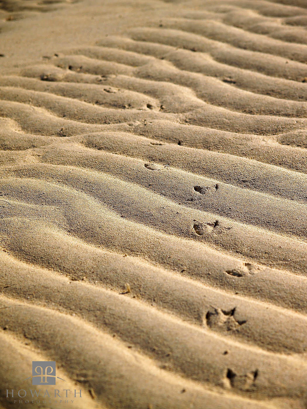 ripples, sand, beach, shallow, photo