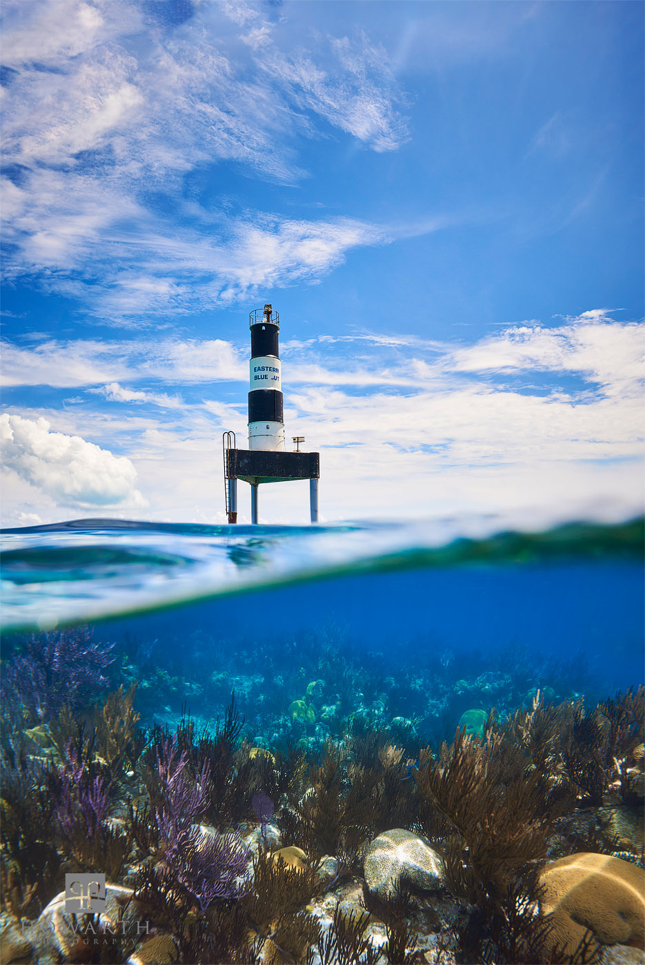 Eastern, Blue, Cut, water, snorkeling, dive, photo