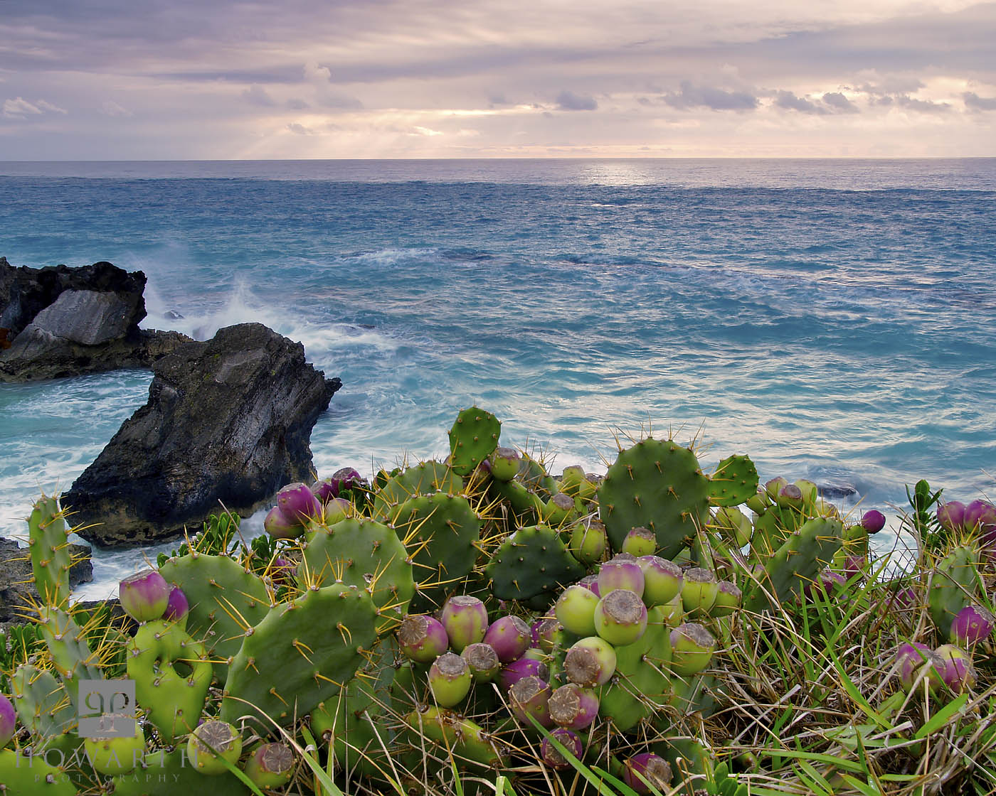 prickly, sunrise, cliffs, astwood, warwick, pear, photo